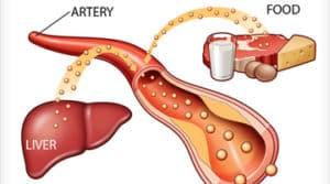 cholesterol sources